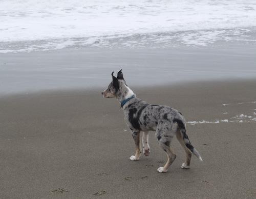 Lark_beach1.jpg